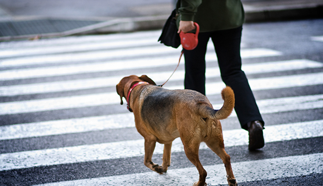 STOP! YOU ARE REWARDING YOUR DOG  FOR PULLING