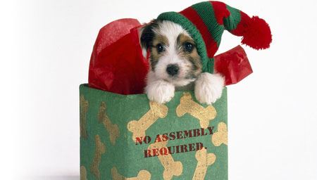 What you need to know about giving your child a puppy as a gift