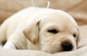 puppy-essential-310x200